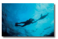 pictures/diving services.jpg